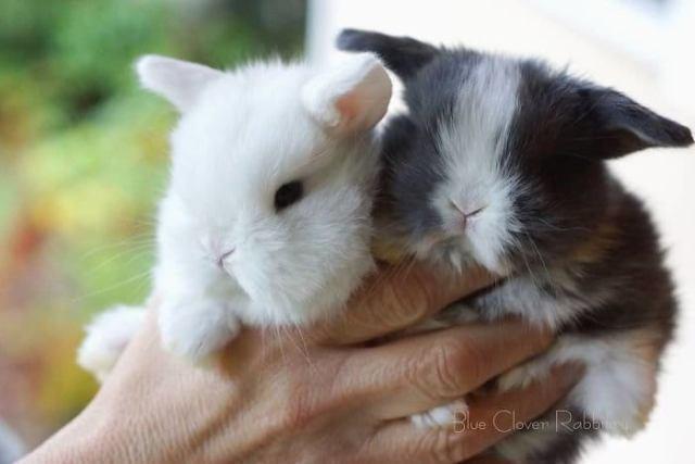 Они способный растопить любой сердце. Невероятно милые крольчата