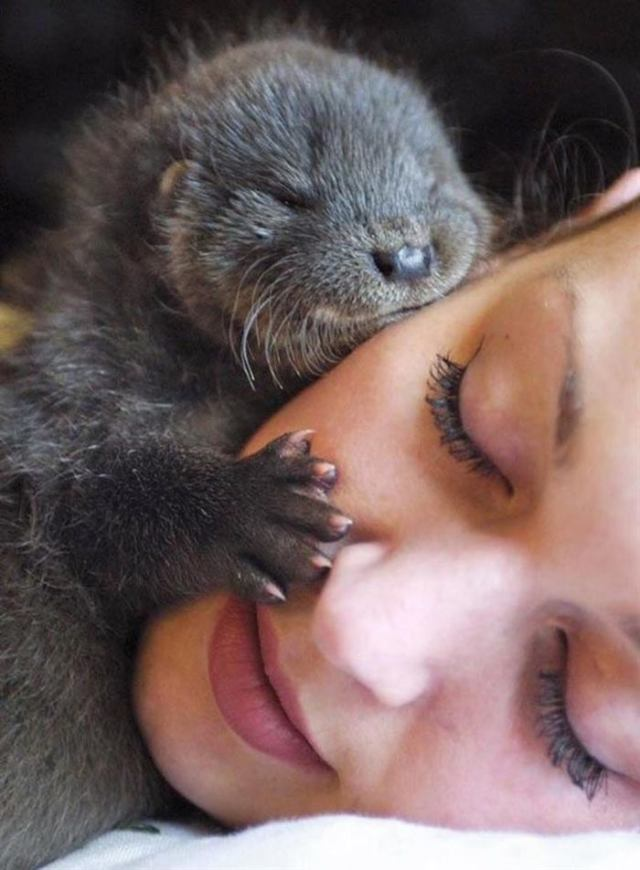 Животные, которые своей милотой поднимут ваше настроение