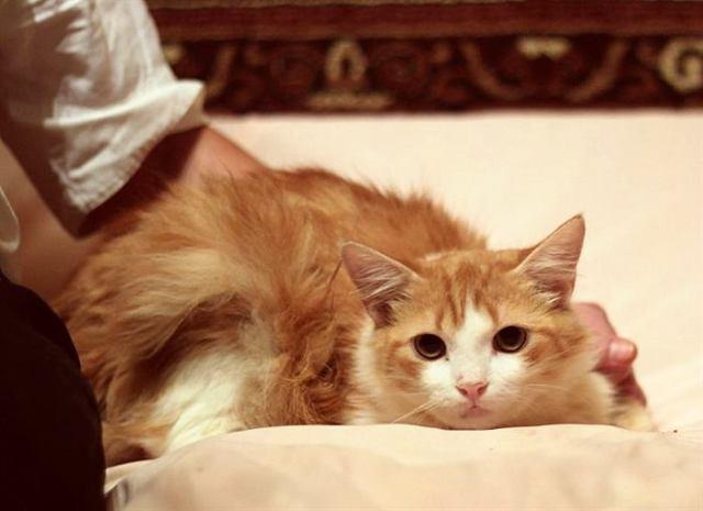 Коты разбираются в людях лучше нас! И вот доказательство