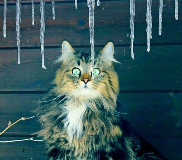 Парень сбил сосульки прямо на кошек! Но карма не заставила себя ждать