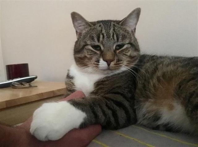 Мужчина забрал самого необычного кота из приюта, не подозревая, что тот изменит его жизнь навсегда