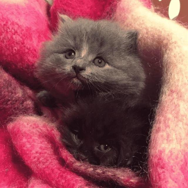 Найденные котята превратились в великолепных котиков