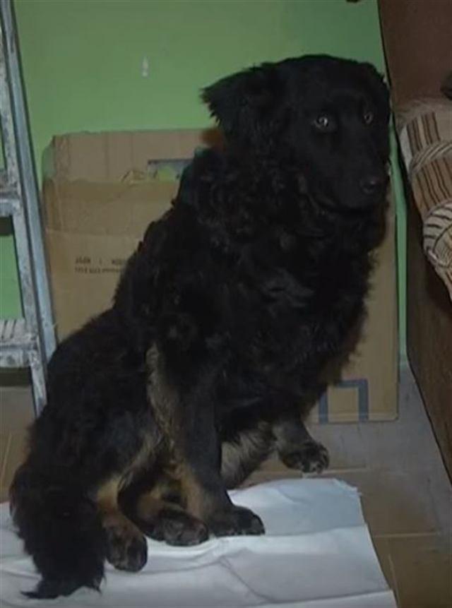 Собаку «усыпил» ветеринар… Утром собака, которую похоронили вчера, ждала людей у подъезда!