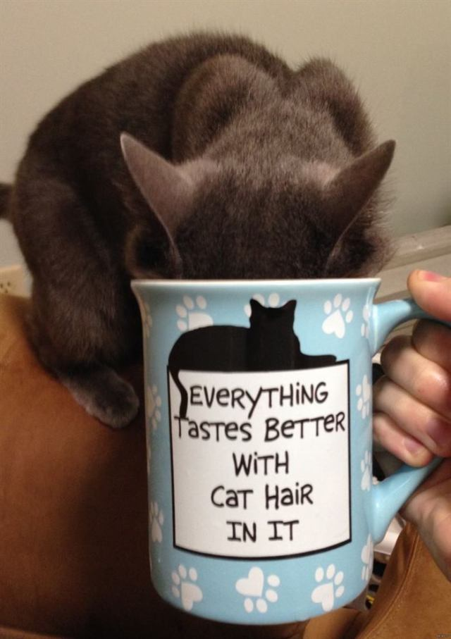22 вещи, которые поймут только те, у кого есть кот
