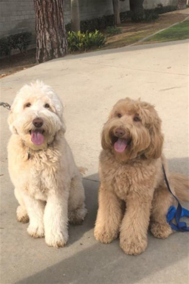 Собаки самые веселые и преданные друзья и эти фотографии тому прямое подтверждение