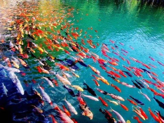 Крутые фото невероятной природы. Это просто нереально!