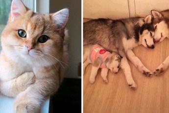 20 Кошек и собак, с которыми можно забыть о проблемах