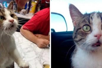 Этой кошке уже 20 лет и у нее провалы в памяти, но она не забывает каждый день говорить своим людям спасибо