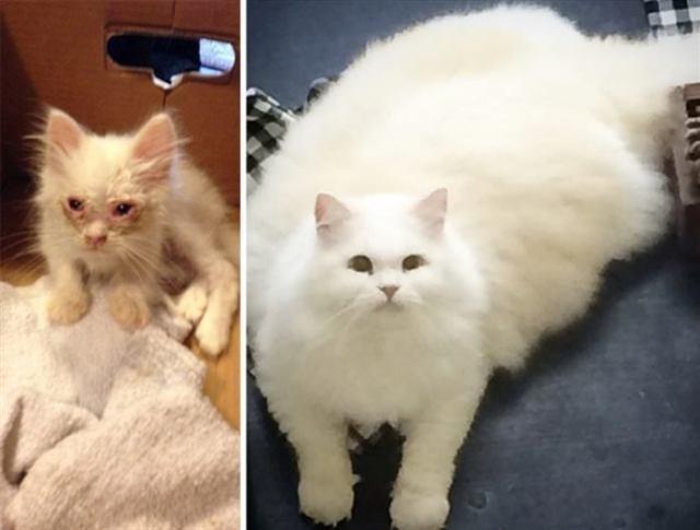 Невероятное преображение миленького котенка, после спасения с улицы
