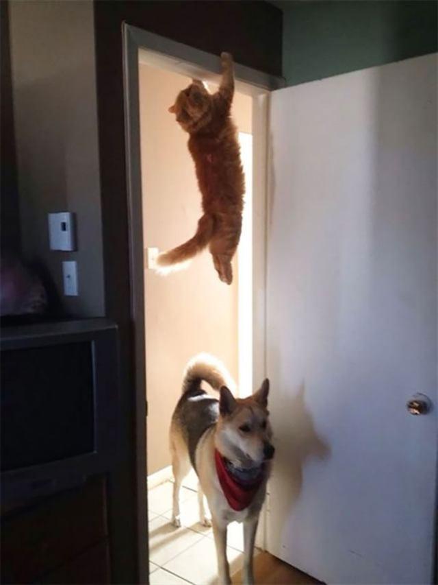 Собакам точно не стоит гордиться подобными ситуациями