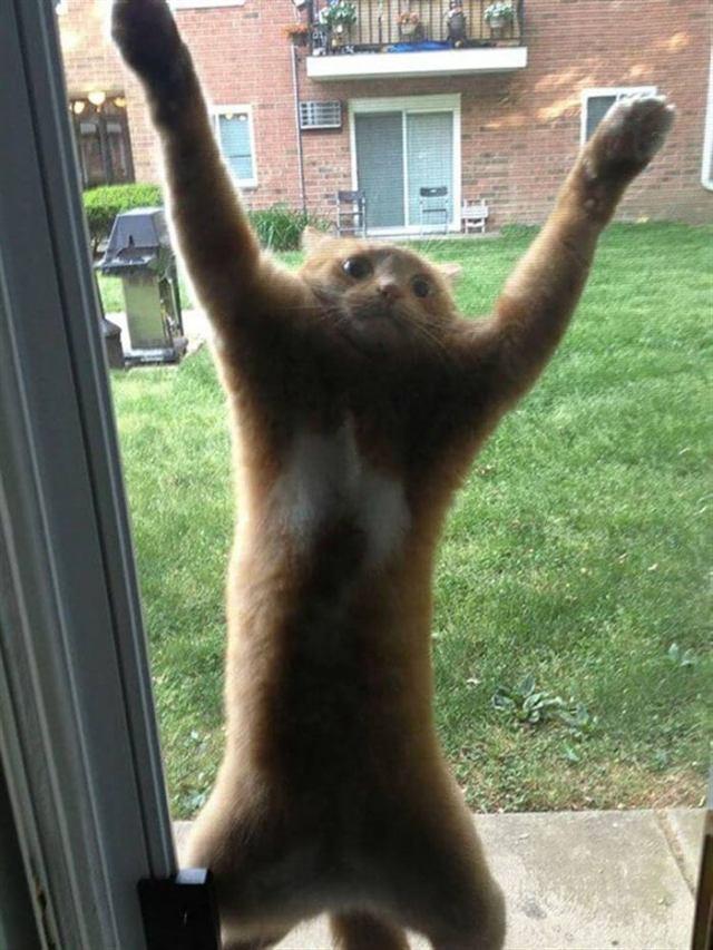 Котики, которые нашли приключений на…