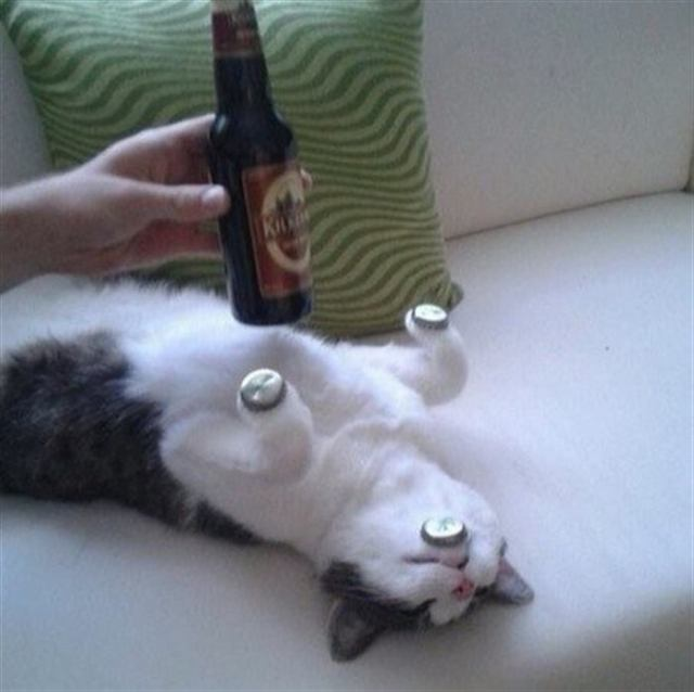 Любители кошек и японской поэзии решили посмотреть, что будет, если объединить эти две вещи вместе