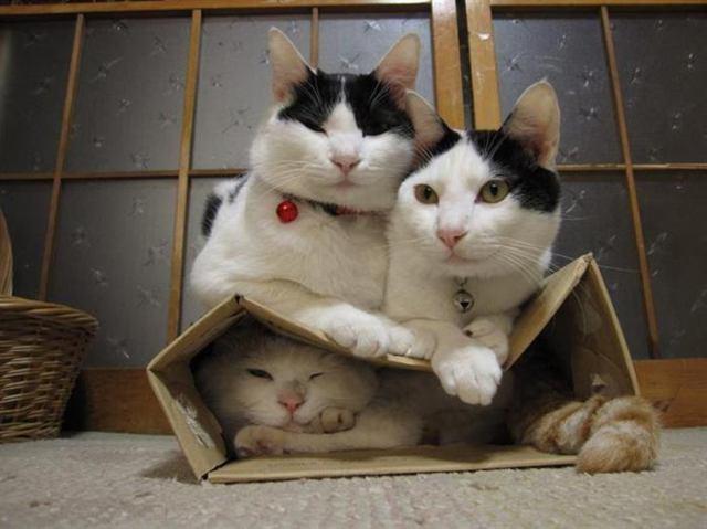 Неопровержимые доказательства того, что коты способны вместиться в любую коробку