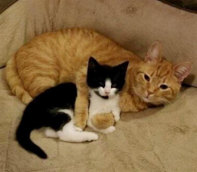 Мужчина спас котенка и хотел отдать его, но его кот решил иначе