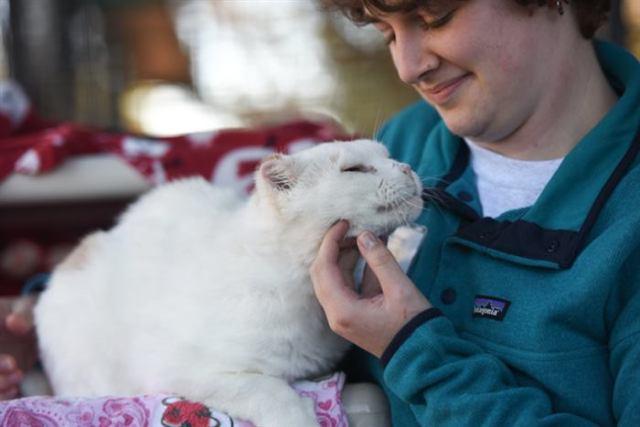 «Мы не будем никого брать», — сказала она своим дочерям, заходя в приют, и увидела самого нежеланного кота