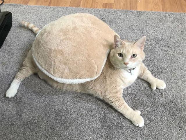 Пара завела шикарного 15-килограммового кота, и теперь они пытаются привести его в форму
