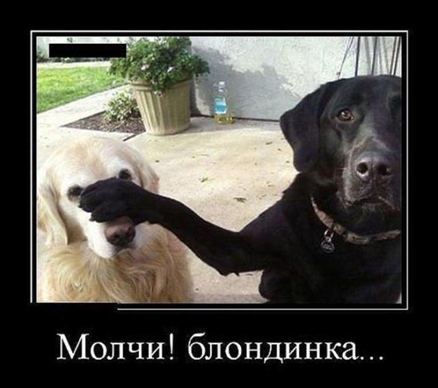 14 крутых мемов с животными, с которыми день будет прожит не зря!