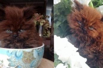 Все воротили нос от этого котенка. Но он вырос настоящим красавцем!