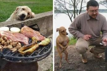 Собачки, которые так смотрят на еду, что им просто невозможно сказать нет