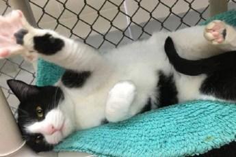 Приют учит котов одному хитрому, но простому трюку, чтобы они быстрее нашли хозяев