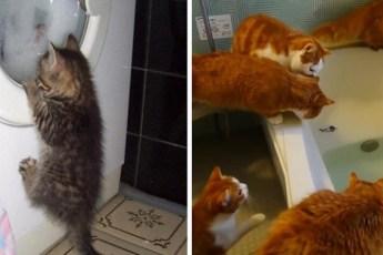 20 примеров того, как выглядит настоящее кошачье любопытство
