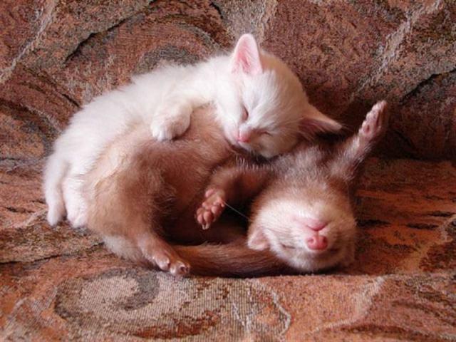 Среди животных бывают непредсказуемые пары друзей