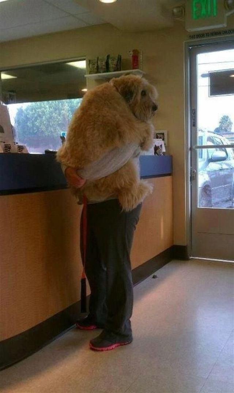 Собаки, которые внезапно осознали, что едут к ветеринару