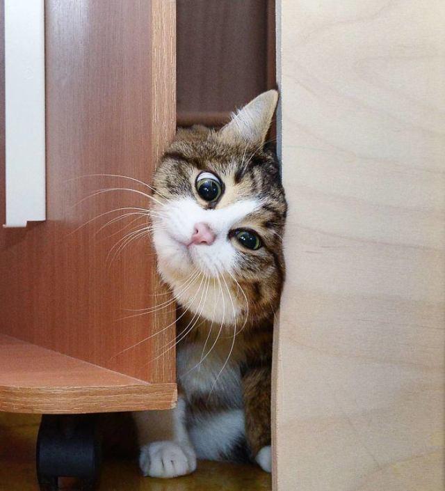 Котик Рекси уверенно строит карьеру лучшего лицедея Интернета