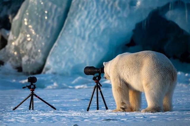 Лучшие номинанты на премию лучшие комедийные фото дикой природы 2018