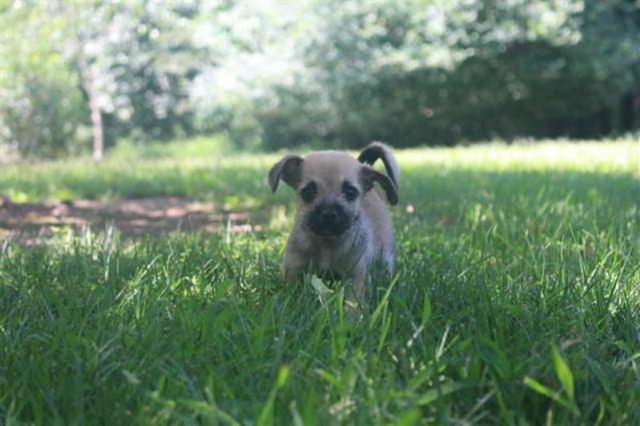 Кто плачет на болоте? Девушка, по колено увязнув в грязи, нашла привязанного к дереву щенка!