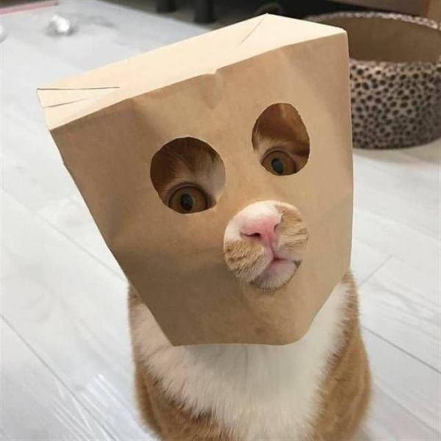 Самые забавные котики
