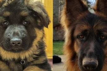 Занимательные фотографии собак, которые наглядно показывают какими они стали взрослыми