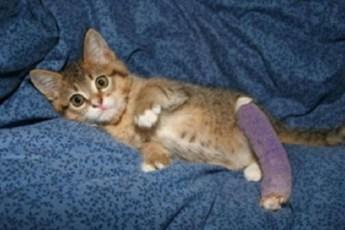 Котенок со сломанной лапкой спас человека