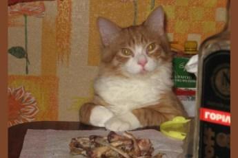 Муж съел полкурицы и хотел свалить на кота, но спалился на мелочах