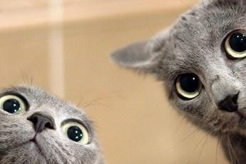 Что было бы, если бы коты стали увлекаться селфи