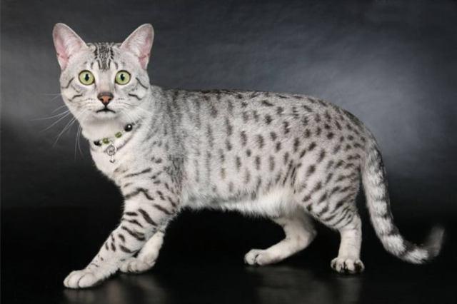 20 интересных фактов о кошках