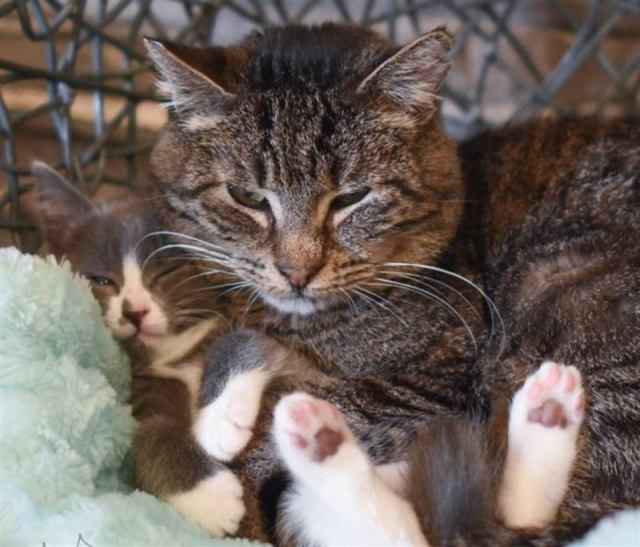Сердитый пожилой кот не доверял никому, но сейчас он превратился в ласкового «дедушку»