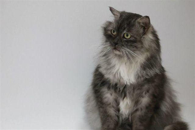 Превращение кота-отказника в роскошное животное