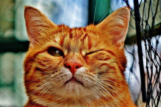 Интересные факты из жизни кошек, о которых вы могли не знать