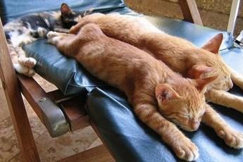 Всем спать! 13 котеек, сладко растянувшихся во всю длину
