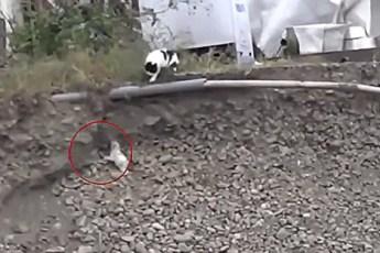 Щенок не мог выбраться из ямы, и добрая кошка пришла к нему на помощь