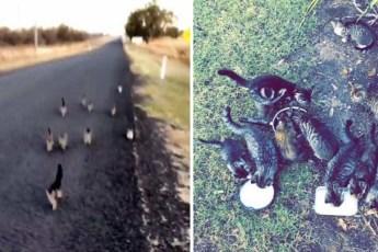 Выгуливая собаку, женщина встретила 10 котят, и они пробежали за ней 1 км до самого дома