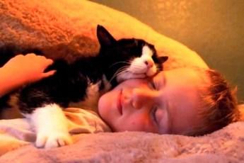 Семья взяла из приюта 20-летнего кота! Но они никак не ожидали, что в нем еще столько любви!