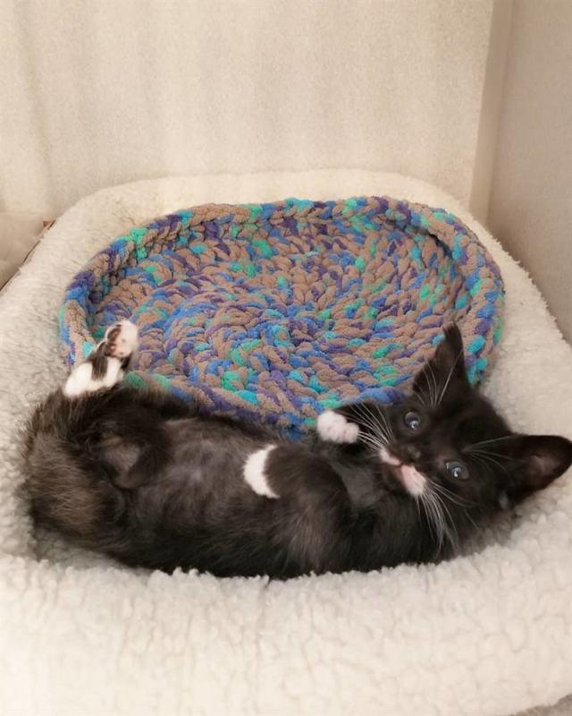 Котёнок размером с суповую ложку решил во что бы то ни стало вырасти большим и сильным
