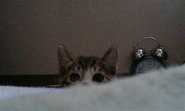 Почему мы любим кошек? 10 доказательств того, что коты нужны каждому