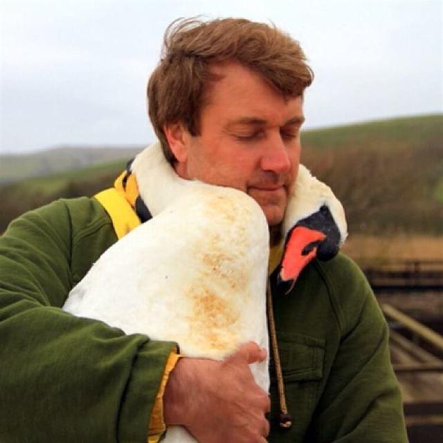 Мужчина спас дикого лебедя, и в качестве благодарности тот не перестает обнимать своего спасителя