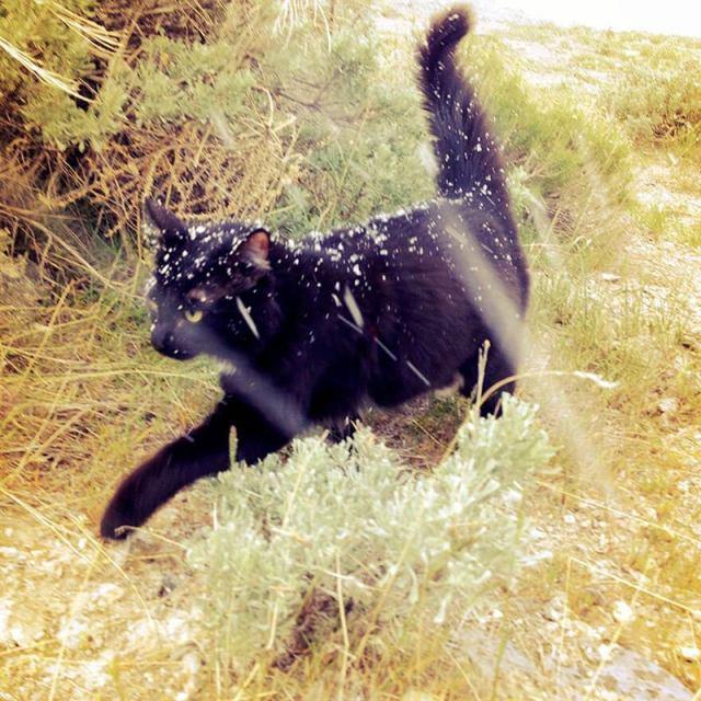 Он взял кошечку из приюта, но это оказалось не совсем обычное животное… Как же хозяину повезло!