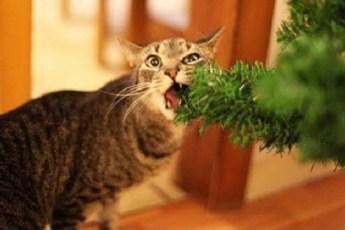 Коты растерявшие всю совесть