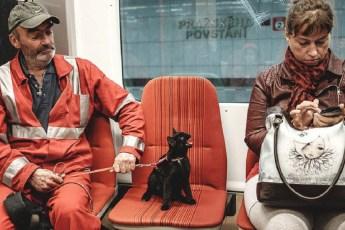 15 развесёлых котов и собак, которые ведут себя очень странно и явно не подозревают об этом