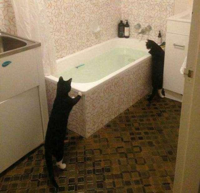 Опровержение мифа о том, что кошки не любят воду